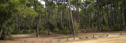 Camping le Bois Joly situé à Saint Jean de Monts