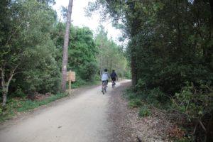 randonnées et pistes cyclables au coeur de la forêt de saint Jean de Monts