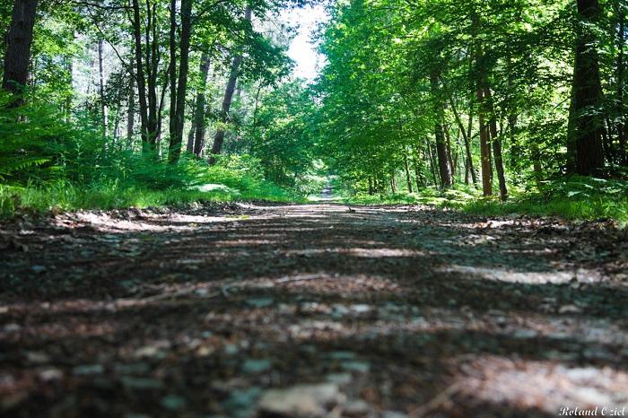 Sentier au coeur de la forêt vendéenne